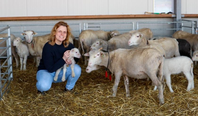 Janny Wijna met enkele van haar schapen op haar Wolboerderij Blij Bezuiden in Koewacht.