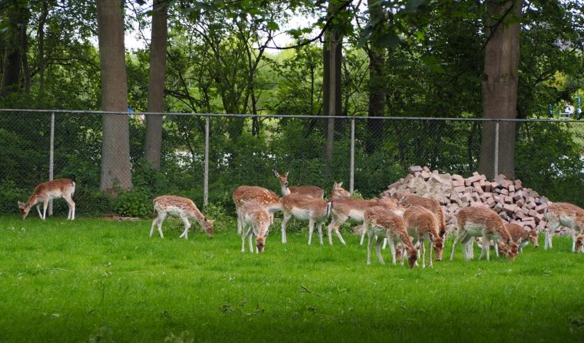 De kinderboerderijen van Stichting Kinderboerderij Clinge-Terneuzen zijn al weer enige tijd gesloten, in verband met de maatregelen om de verspreiding van het coronavirus tegen te gaan.