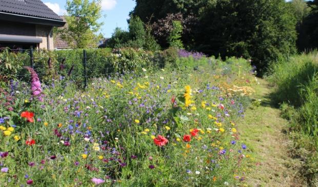 Kleurrijk bloemenveld langs Moerenpad