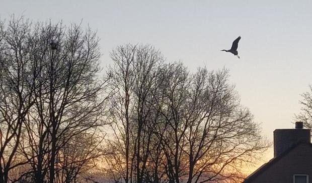 Reiger bij zonsondergang