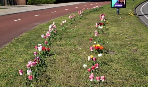 <p>Voetgangers, fietsers en automobilisten kunnen genieten van deze openbare bloemenhulde.</p>