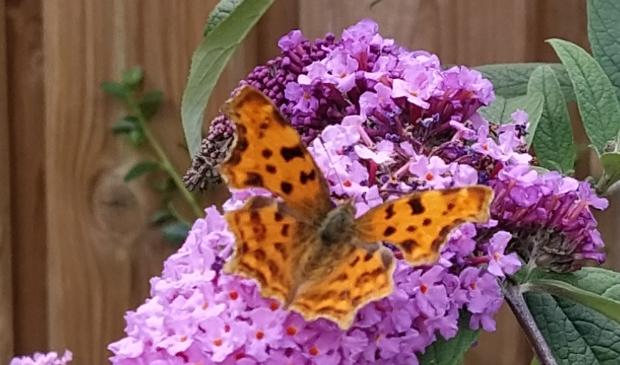 Bloementuin voor insecten en vlinders