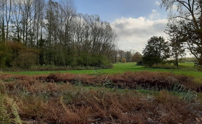 Tijdens de wandeling van Natuurwerkgroep Liempde is het volop genieten van de natuur. (Foto: Ton Popelier).
