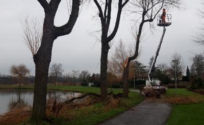 Bij de vijver Vorsenpoel brak een enorme tak uit een wilg. De boom bleek niet te redden en werd dinsdag gerooid. (Foto: Henk van Weert).