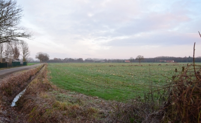 <p>Op dit veld tussen de Esschebaan en de Renbaan kan de gemeente tien hectare aan zonnepanelen kwijt.&nbsp;</p>