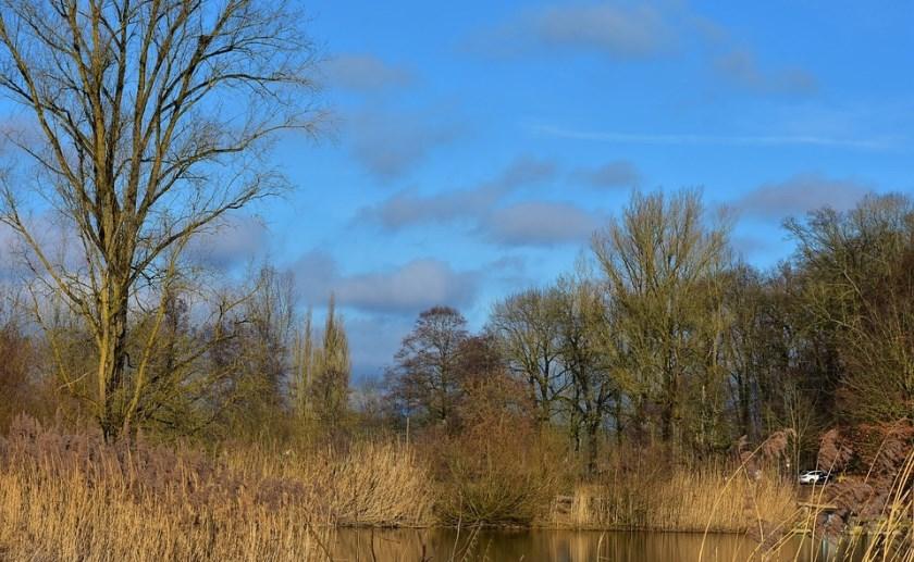 Een groot deel van de Brabantse bossen is eenzijdig.