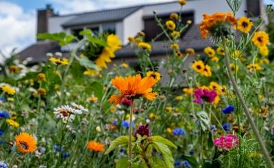 <p>Bloeiende wilde bloemen aan de Robert Schumanlaan.&nbsp;</p>