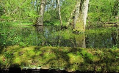 Het oude dal bij de Beeksche Waterloop behoort tot de zeldzame locaties waar nog leembossen te vinden zijn.