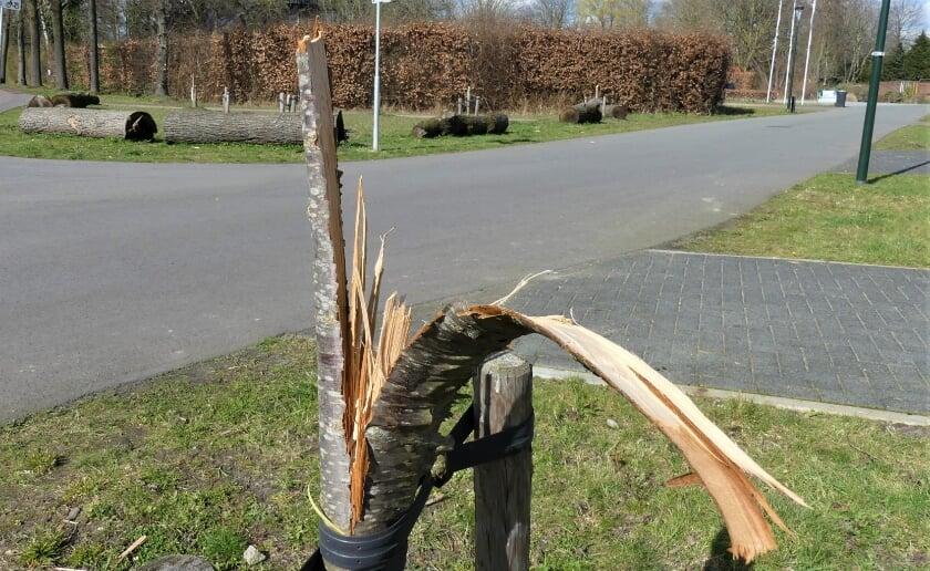 <p>In de wijk In Goede Aarde zijn diverse jonge boompjes vernield. Daarnaast was er de afgelopen maanden nog meer vandalisme in de buurt. Foto: Ad van de Wetering.</p>