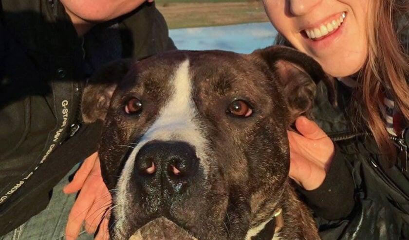 Bram en Melanie Verheijen, en hun hond Kay.
