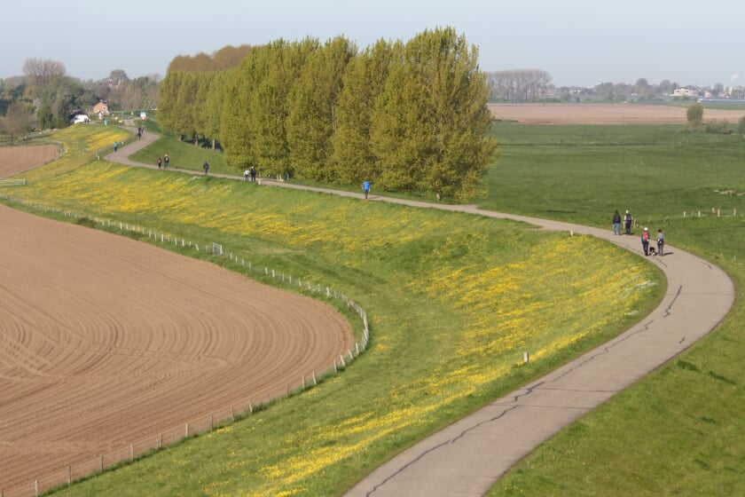 <p>Dijk in Maas en Waal.</p>
