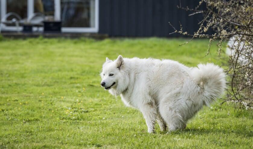 Dna-profiel uit hondendrollen leidt naar honden en hun baasjes.