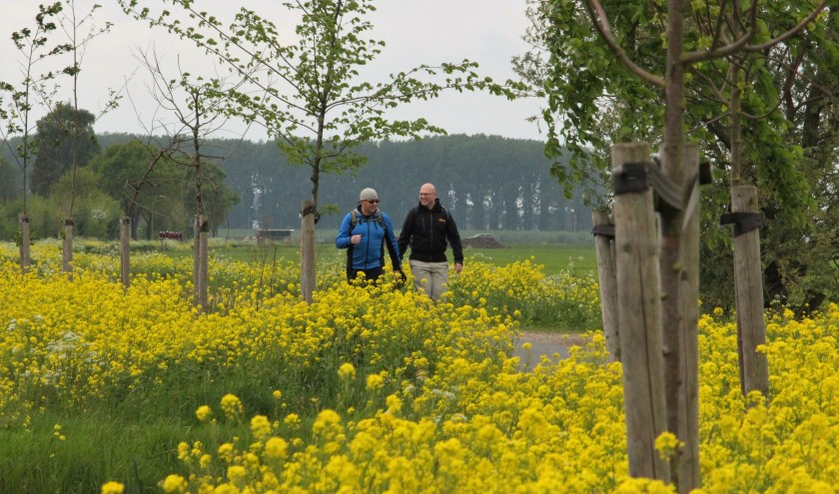 Wandelaars tijdens de Leeuwenmars 2019.