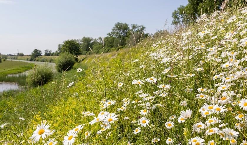 bloemen langs de dijk