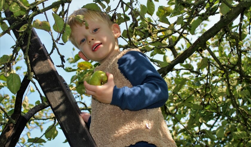 zelf appels en peren plukken in de boomgaard bij familie Banken