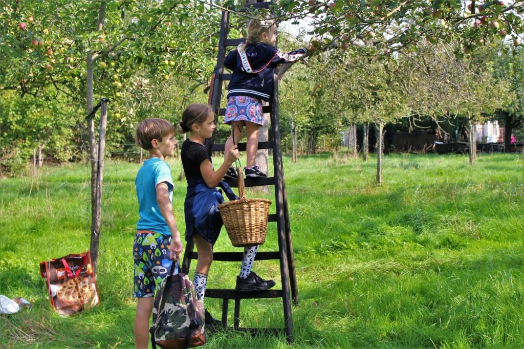 zelf appels en peren plukken in de boomgaard bij familie Banken Foto: Reinier Jansen © DeMaasenWaler