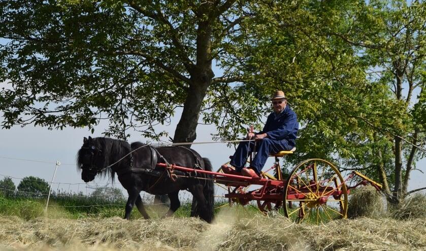 <p>Jan van Ooijen met zijn shetlander voor de wagen.</p>