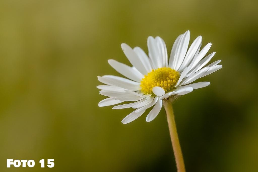 Foto 15 Ria Kuijpers © mooischijndel