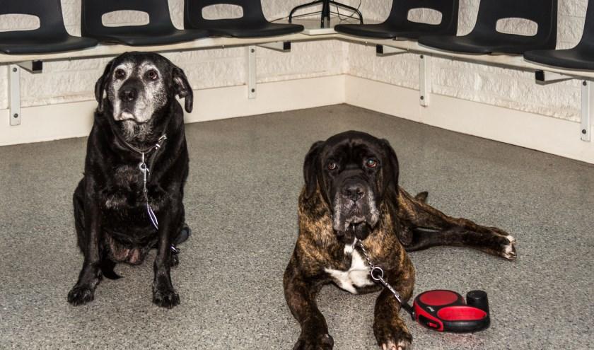 Misschien dat deze twee oudjes het niet meer zo goed horen maar de meeste honden zijn doodsbang voor vuurwerk