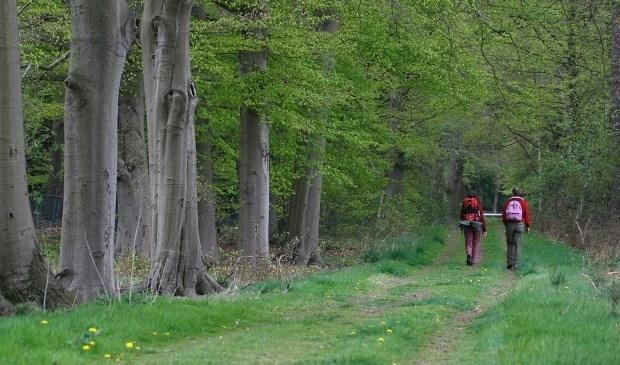 De Ridderoordse bossen. 'We beschermen natuur en erfgoed voor de eeuwigheid'. Foto: Renk Ruiter