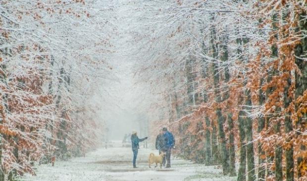 Sneeuw in het Leijense Bos