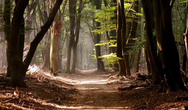 Het  zogenaamde 'Boombos' in het Speulderbos bij Garderen. Van herfstkleuren is nog niet veel te zien, maar de dagen worden korter, de nachten kouder en dan is het gauw gedaan met de groene blaadjes. De bomen worden steeds dikker en… spookachtig. Sommige wandelaars durven zelfs niet alleen door het Speulderbos te lopen…