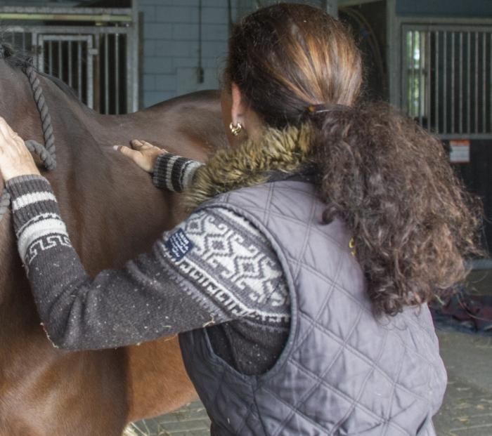 Workshop paardenmassage