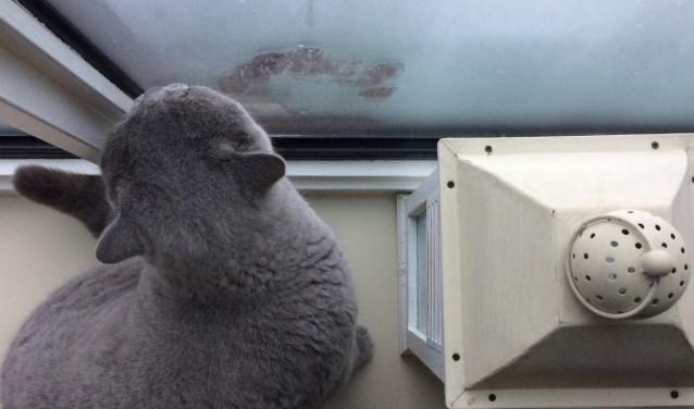 Kat Link mag weer een winter de condens van de ramen likken in zijn Vestiawoning.