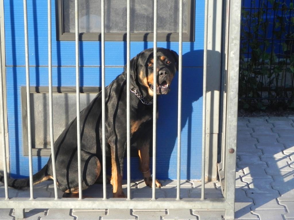 Hond Yara kun je beter niet los in het donker tegen komen!                                Richard Thoolen © BDU media