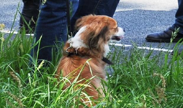 Een hondje die in de personenauto zat bleek ongedeerd AberMedia © BDU media