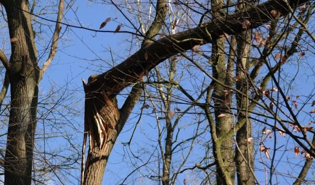 In de Bergwegbosjes hangen veel (bijna) loshangende takken