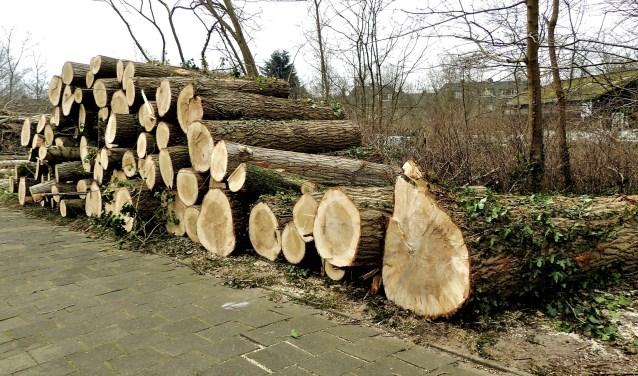 Bomenkap