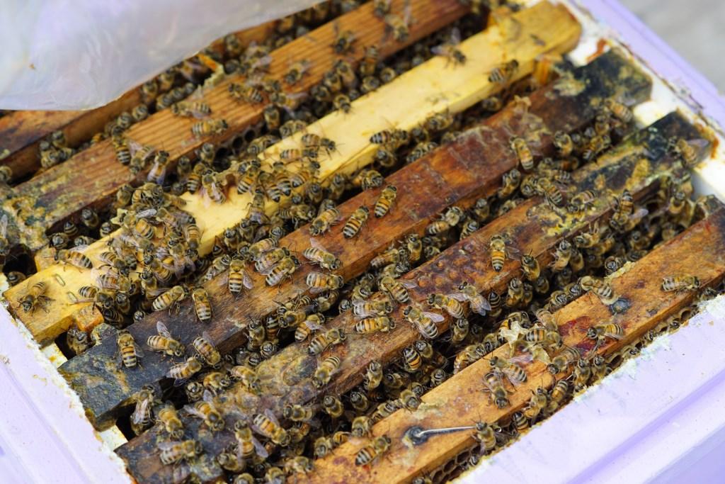 Deze bijen zijn onderdeel van het project.  Naomi Heidinga © BDU media