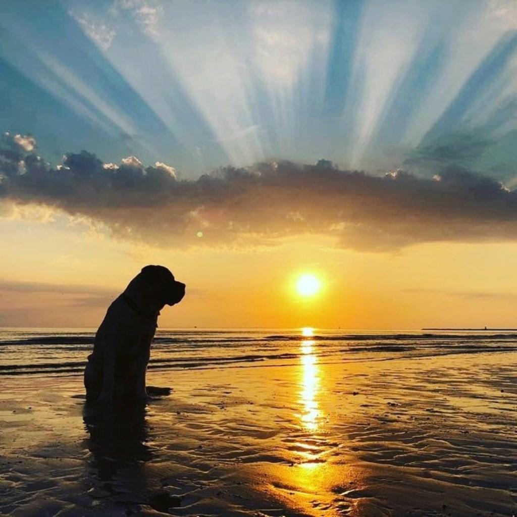 Mijn hond Bono aan het IJmuidense strand. Deze foto is gemaakt op maandagavond 16 juli tijdens de zonsondergang, met mijn telefoon. Foto Ilse Bakker Ilse Bakker © BDU