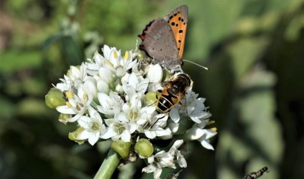 <p>Groei en Bloei geeft een lezing over klimaatverandering en toekomstig tuinieren</p>