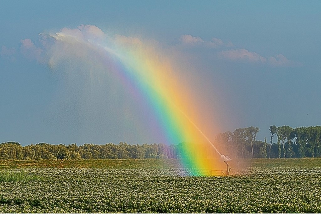 Waterkanon op een aardappelveld in de Biesbosch Arie Jan van Termeij © BDU media
