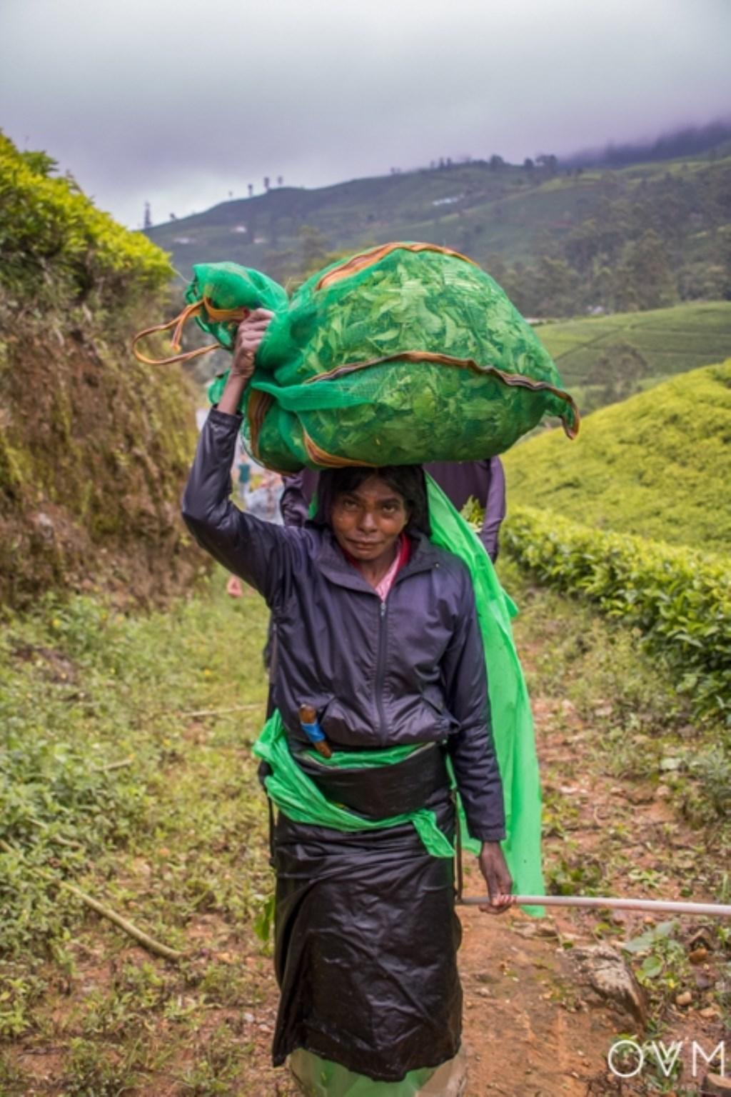 Een theeplukster op de Edinburgh theeplantage. Dit is een van de grootste theeplantages van Sri Lanka. De thee die er geplukt wordt heet Ceylon. Odette van Drunen © BDU Media