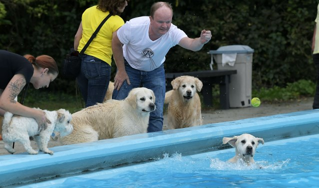 Hondenzwemmen