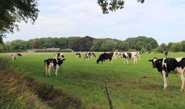 ,,Frappant dat we in een boerendorp discussie hebben of dieren wel of niet buiten mogen lopen'', aldus Jhony Stalman.