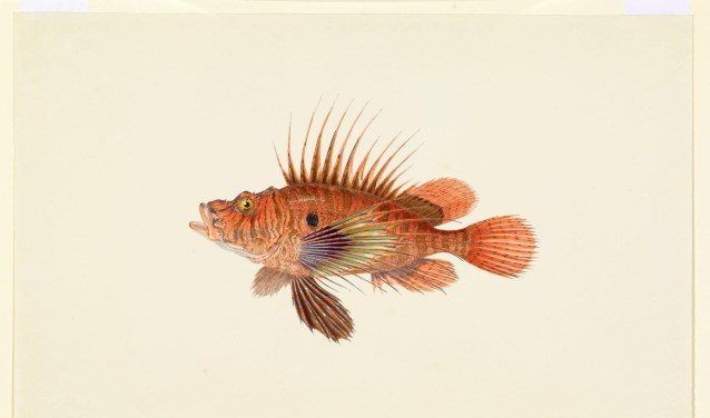 Een van de aquarellen die bij Teylers Museum te zien is.