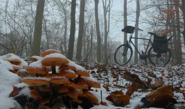 Fluweelpootjes met een besneeuwd dakje.