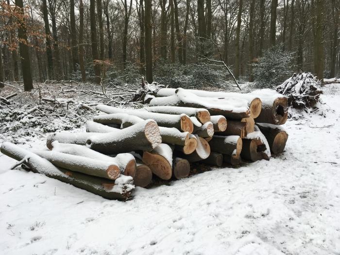 Gerooide bomen Willy van Dijk-Doornenbal © BDU media