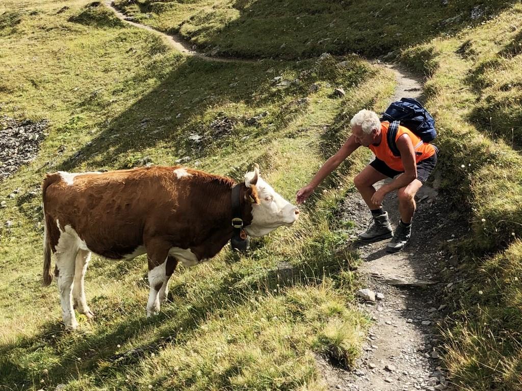 Onderweg papte Fred met iedere koe aan die ze tegen kwamen. Wim Jacobs © BDU media