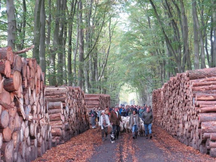 Prachtige doortocht tussen de gekapte bomen Onno Wijchers © BDU media