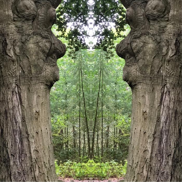 Bomen spreken. Creatief met bomen