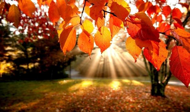 Herfstpracht