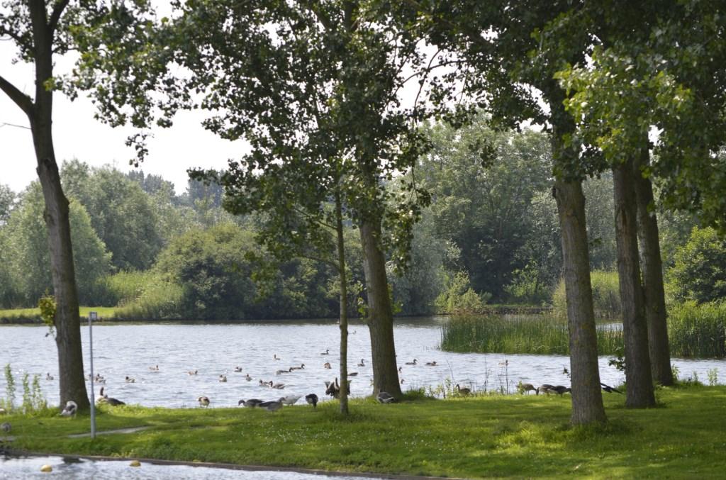 Ganzen bij Ouderkerkerplas. Groengebied Amstelland © BDU media