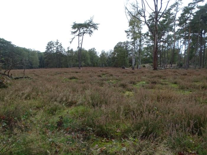 Heideveld Hoog Moersbergen