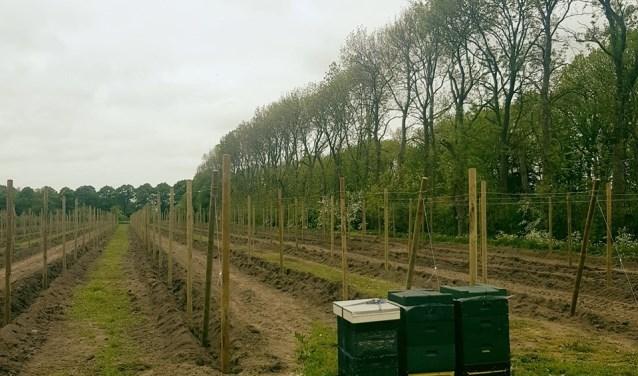 Nieuwe boomgaard op de Olmenhorst
