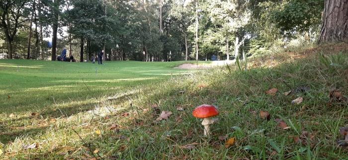 Naderende herfst op de Doornse Golf Club